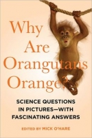 Why Are Orangutans Orange